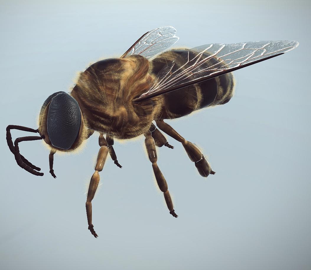 honey bee drone 3d wirtualna pasieka