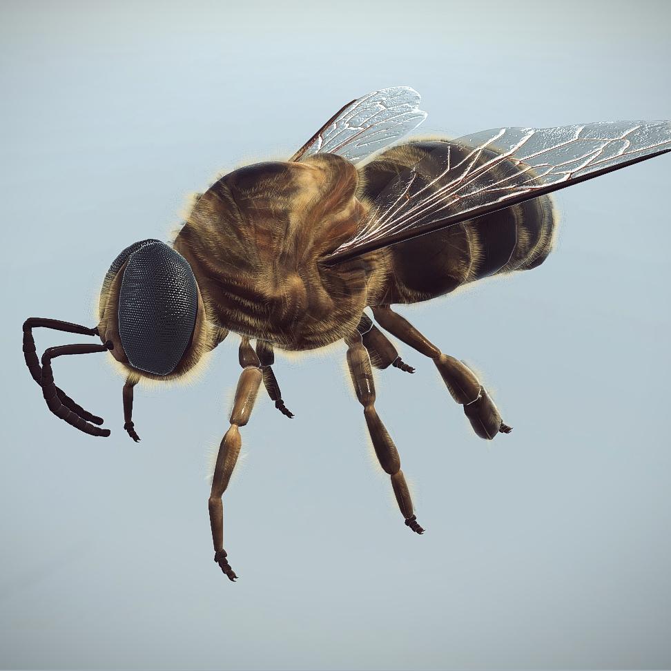 bee drone 3d model